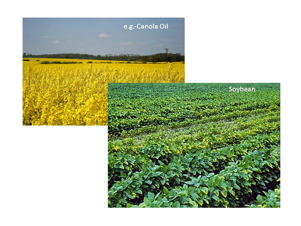 e.g.-Canola Oil Soybean