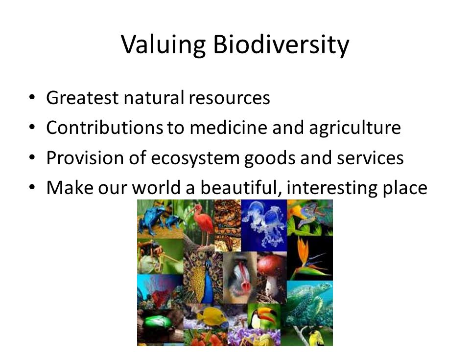 Valuing Biodiversity Greatest natural resources