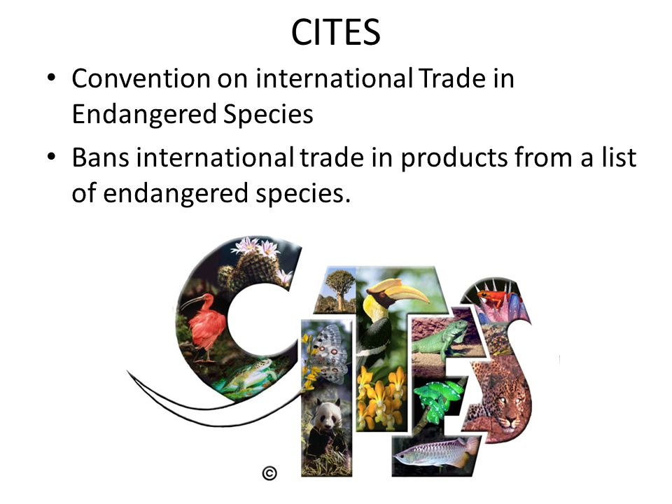 CITES Convention on international Trade in Endangered Species