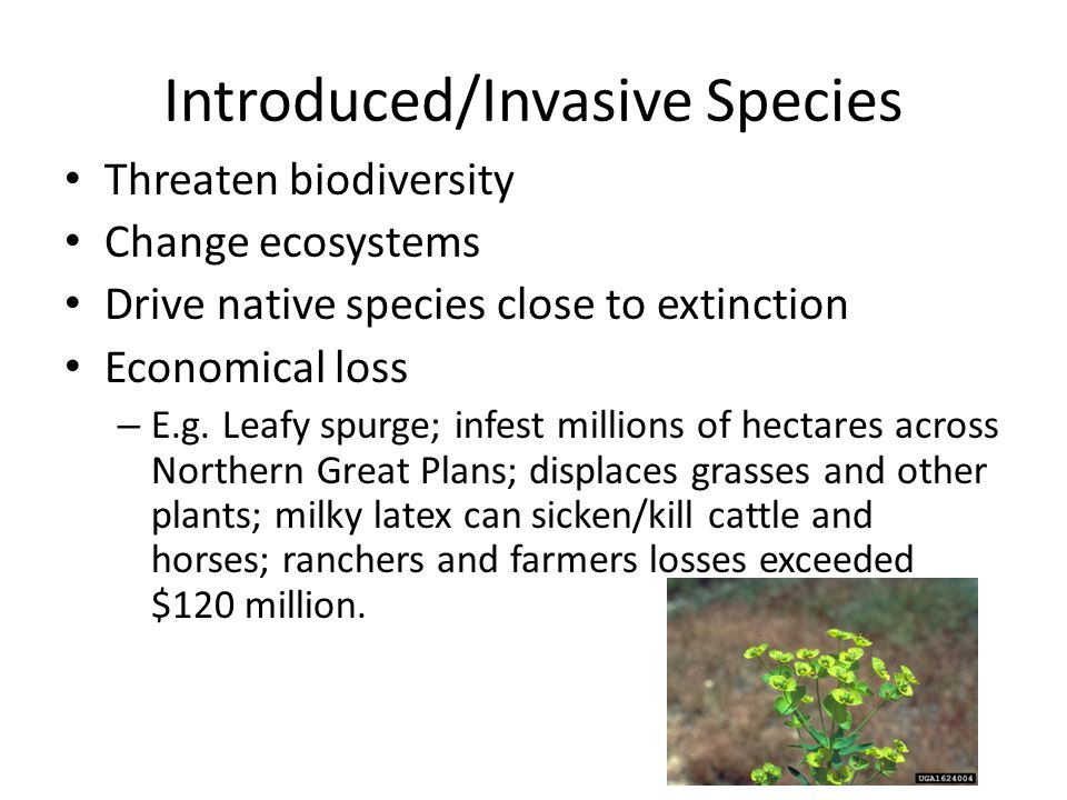 Introduced/Invasive Species