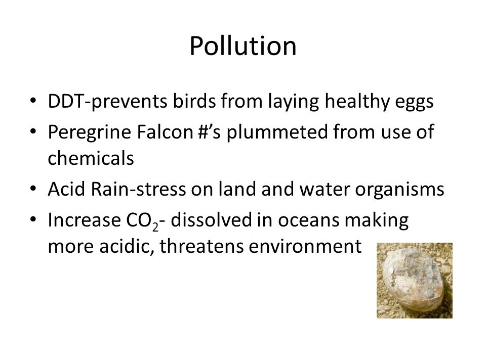 Pollution DDT-prevents birds from laying healthy eggs