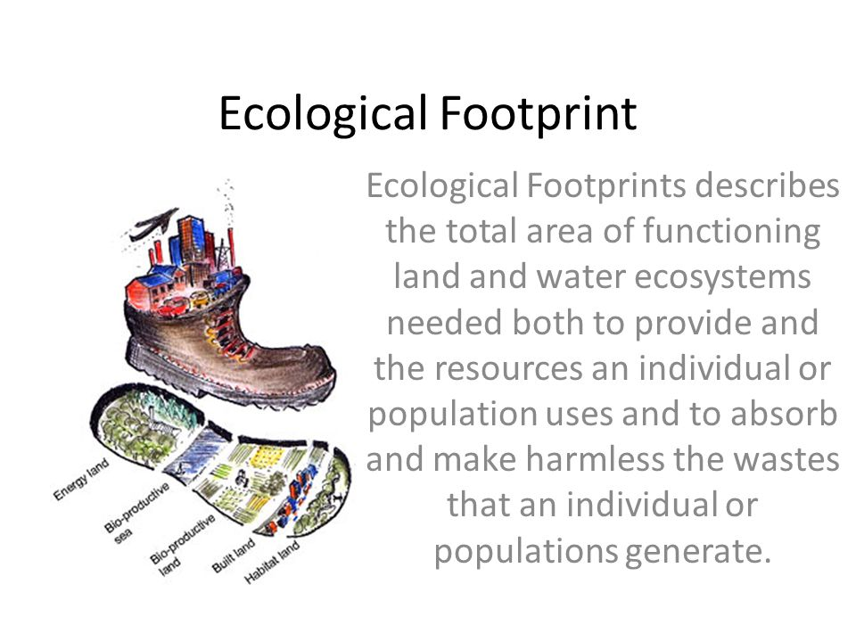 Ecological Footprint