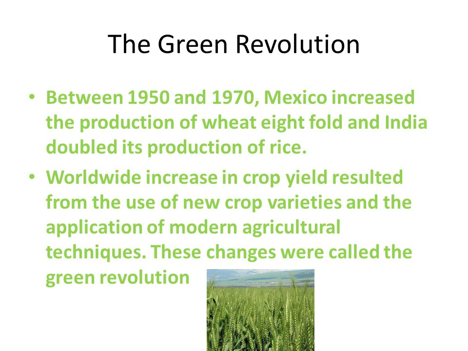 The Green Revolution Between 1950 and 1970, Mexico increased the production of wheat eight fold and India doubled its production of rice.