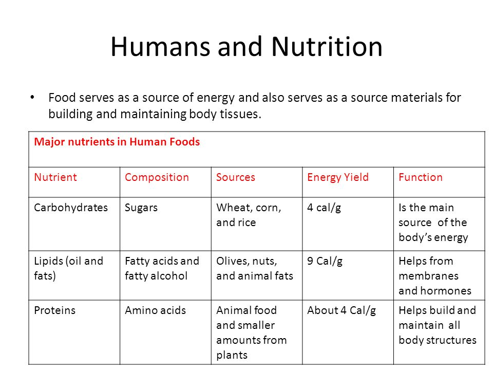 Humans and Nutrition Food serves as a source of energy and also serves as a source materials for building and maintaining body tissues.