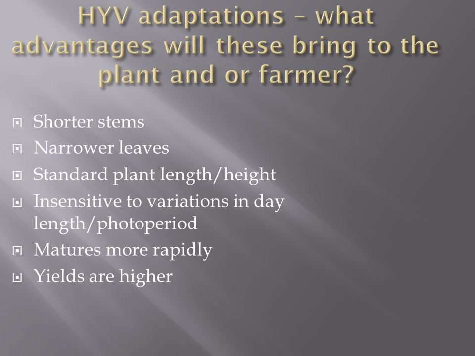 HYV adaptations – what advantages will these bring to the plant and or farmer