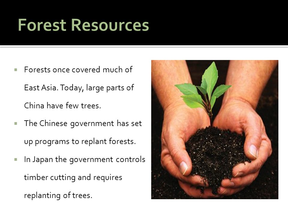 Forest Resources Forests once covered much of East Asia. Today, large parts of China have few trees.