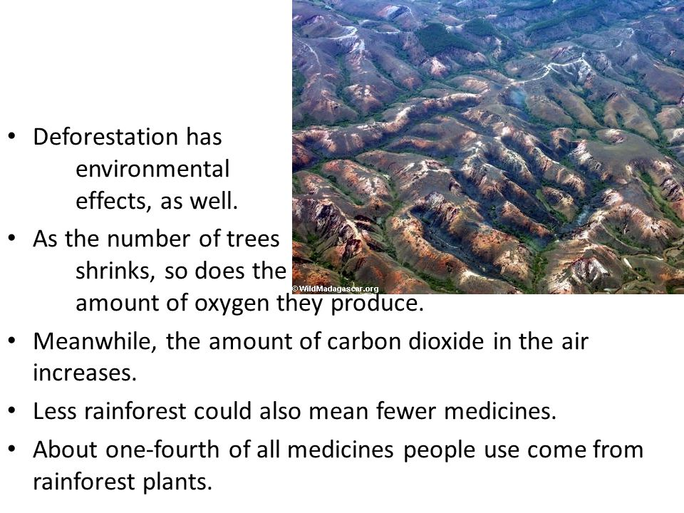 Deforestation has environmental effects, as well.