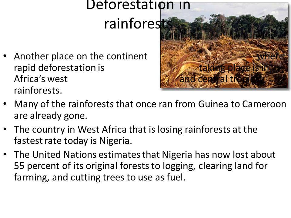 Deforestation in rainforests
