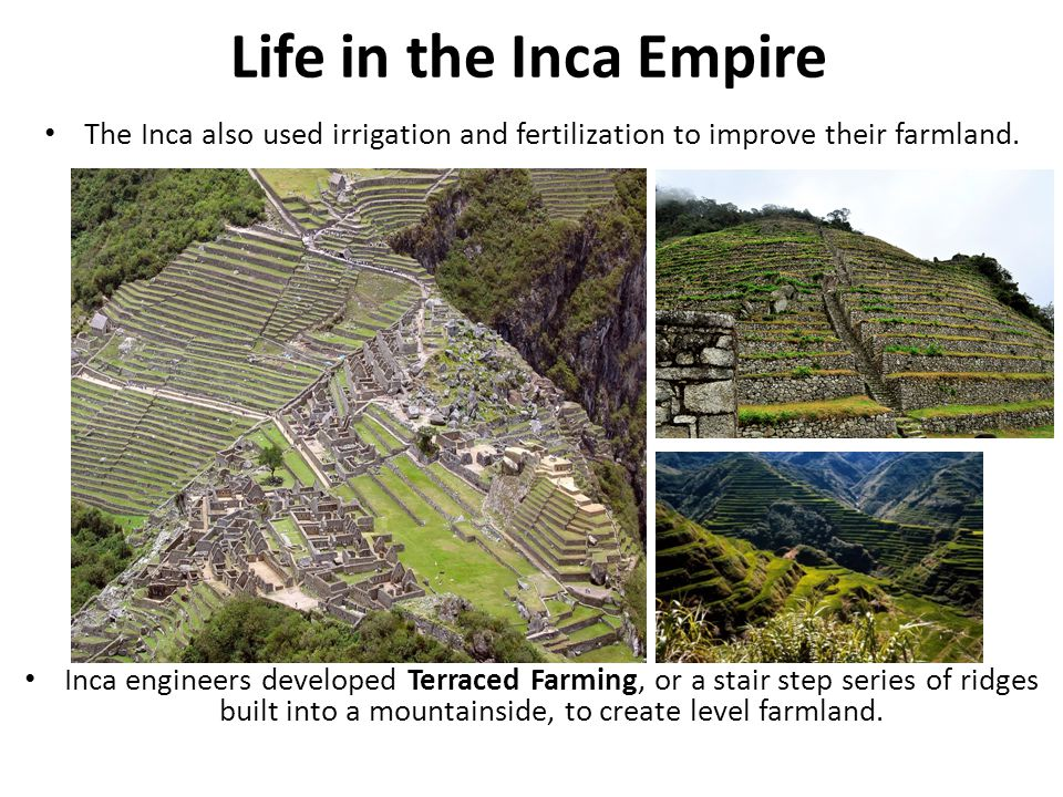 Life in the Inca Empire The Inca also used irrigation and fertilization to improve their farmland.