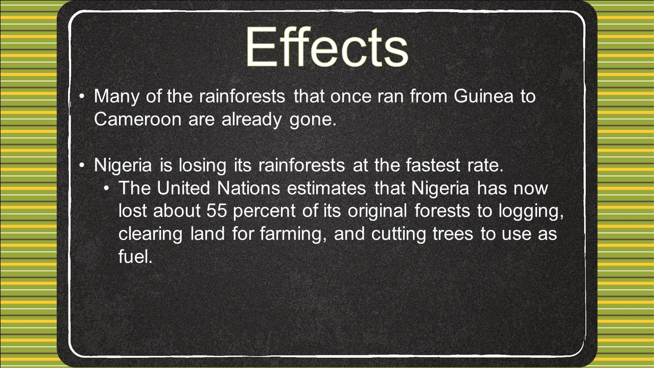 Effects Many of the rainforests that once ran from Guinea to Cameroon are already gone. Nigeria is losing its rainforests at the fastest rate.