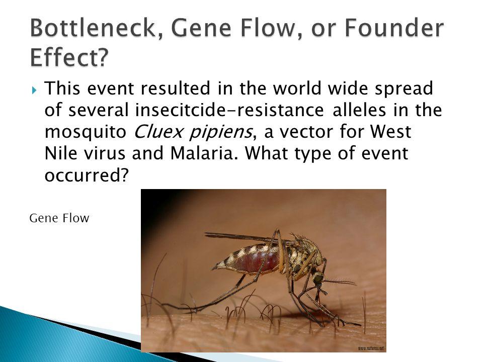 Bottleneck, Gene Flow, or Founder Effect