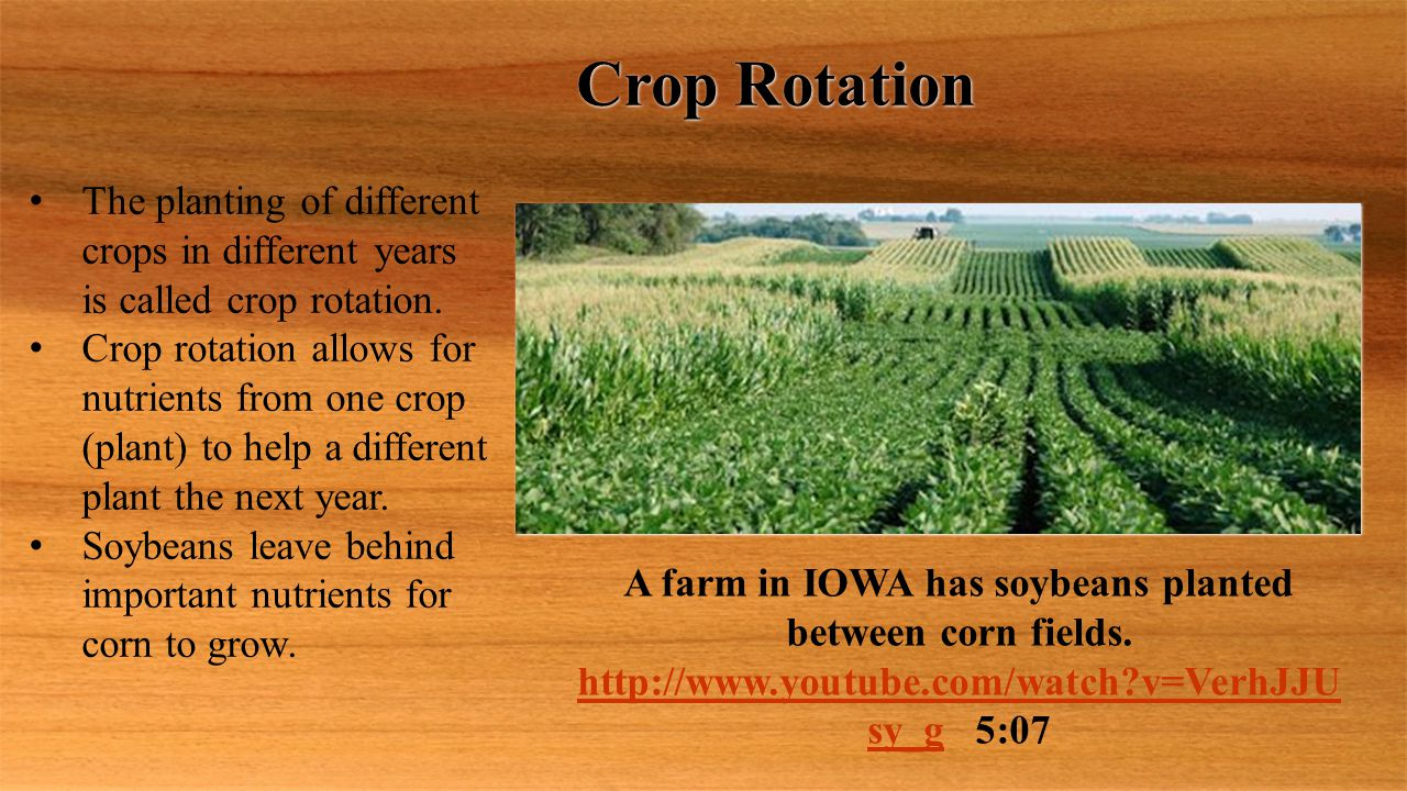 Crop Rotation The planting of different crops in different years is called crop rotation.