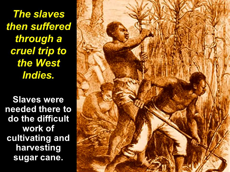 The slaves then suffered through a cruel trip to the West Indies.
