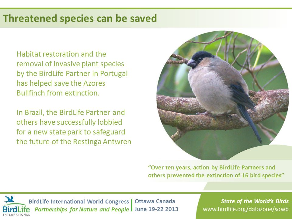 Threatened species can be saved