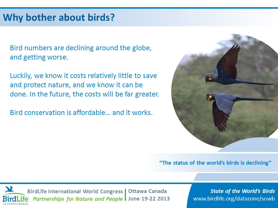 Why bother about birds Bird numbers are declining around the globe, and getting worse.