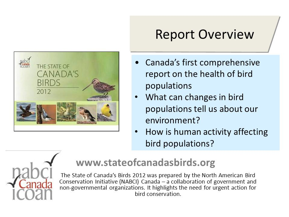 Report Overview www.stateofcanadasbirds.org