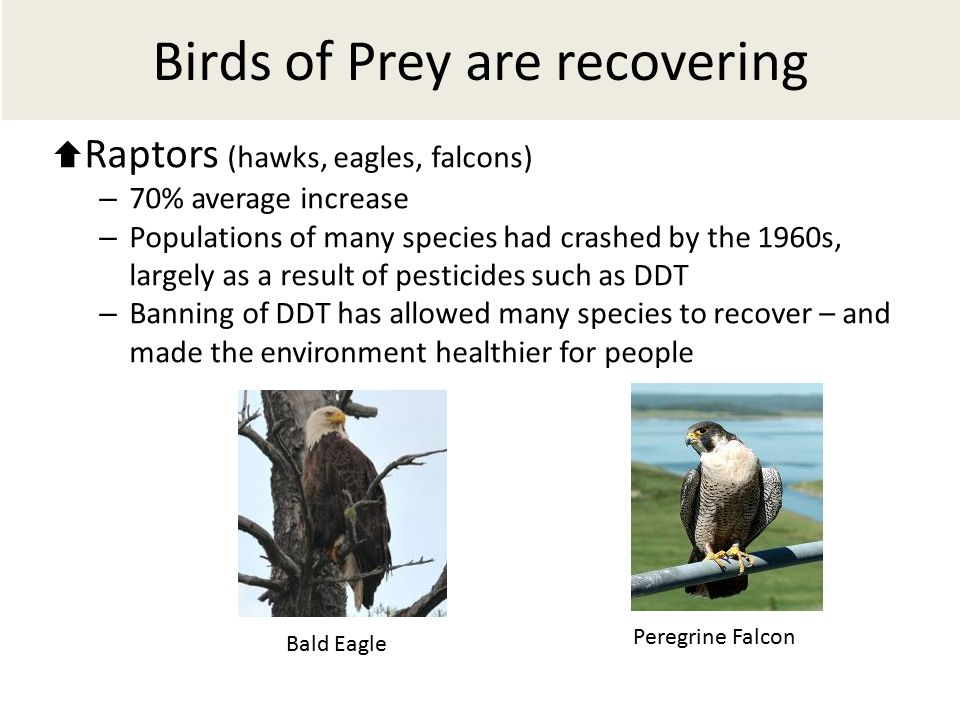 Birds of Prey are recovering