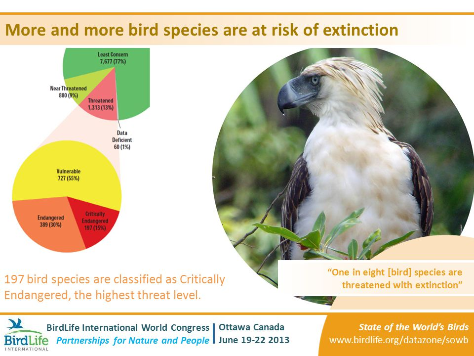 More and more bird species are at risk of extinction