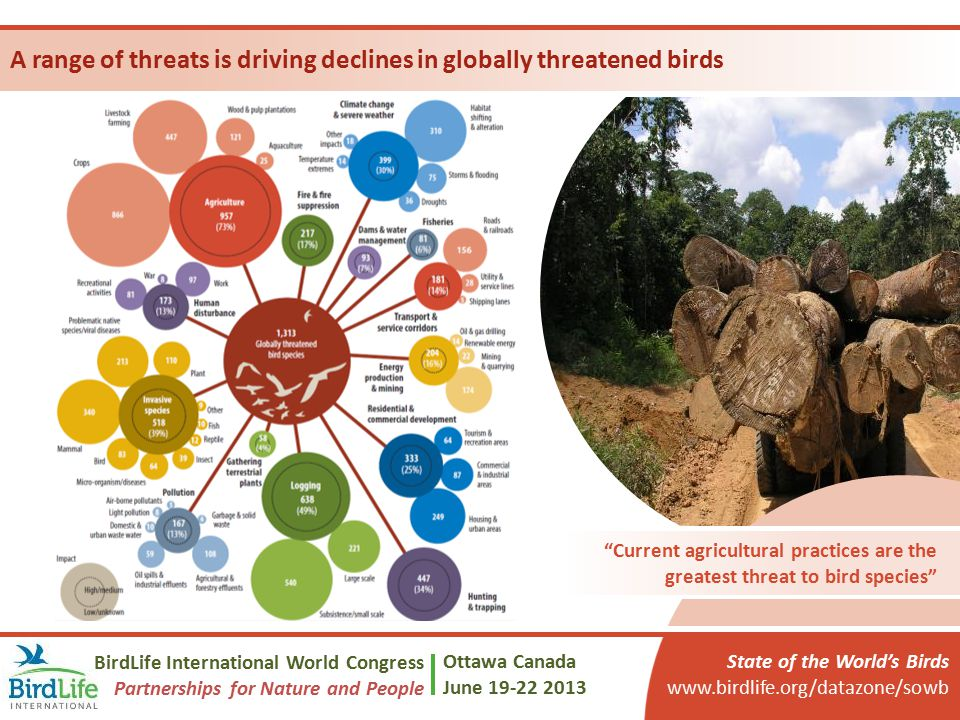 A range of threats is driving declines in globally threatened birds