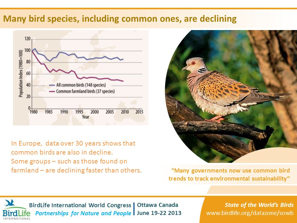 Many bird species, including common ones, are declining
