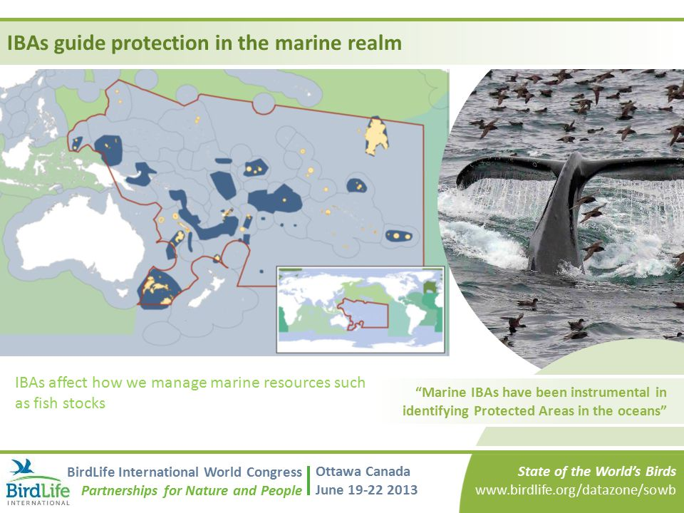 IBAs guide protection in the marine realm
