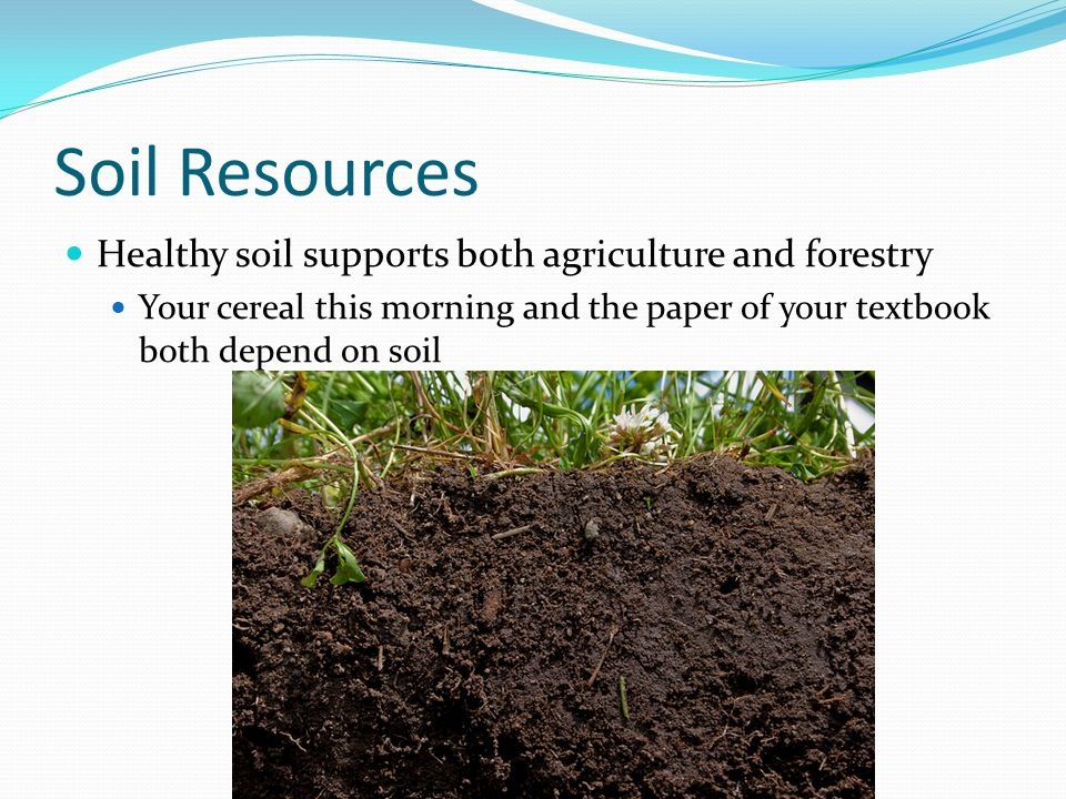 Soil Resources Healthy soil supports both agriculture and forestry