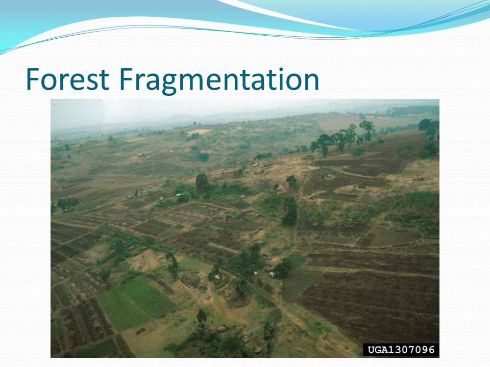 Forest Fragmentation