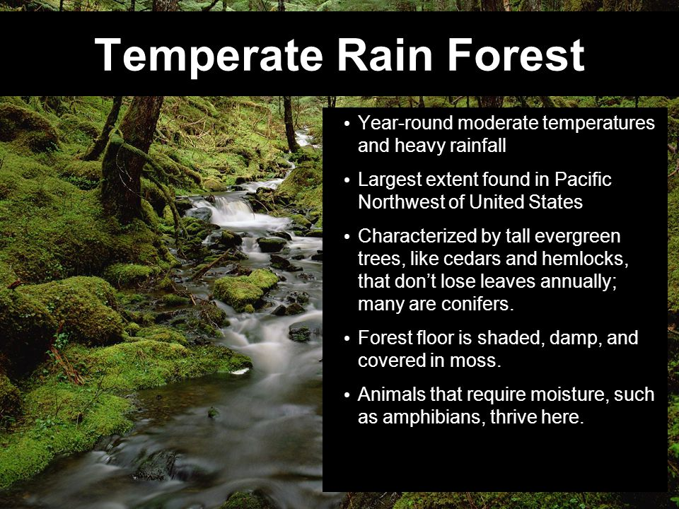 Temperate Rain Forest Year-round moderate temperatures and heavy rainfall. Largest extent found in Pacific Northwest of United States.