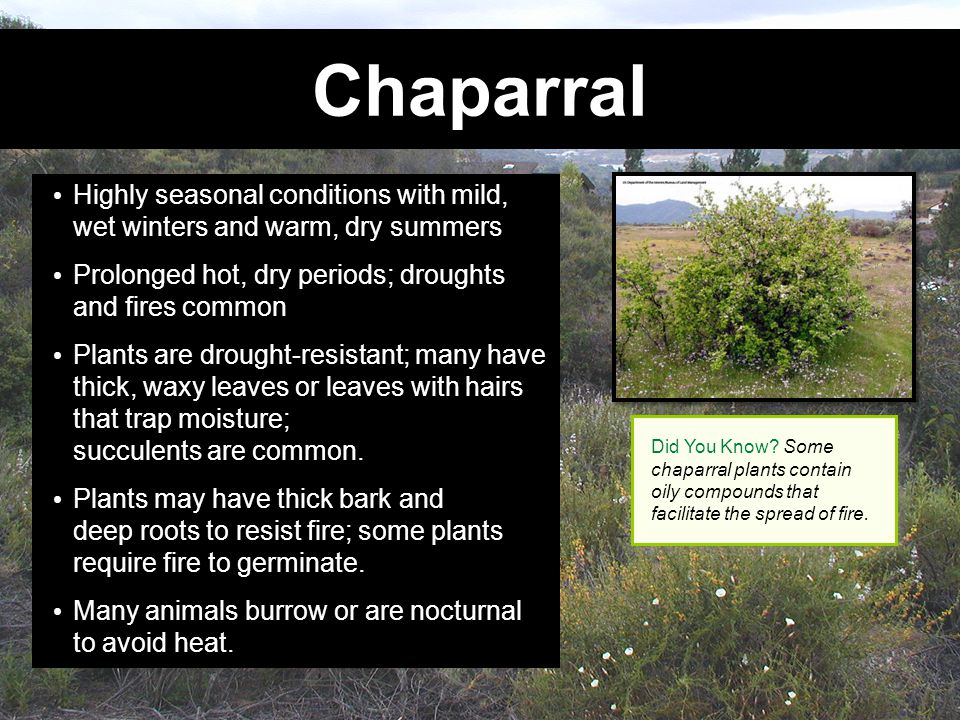 Chaparral Highly seasonal conditions with mild, wet winters and warm, dry summers. Prolonged hot, dry periods; droughts and fires common.