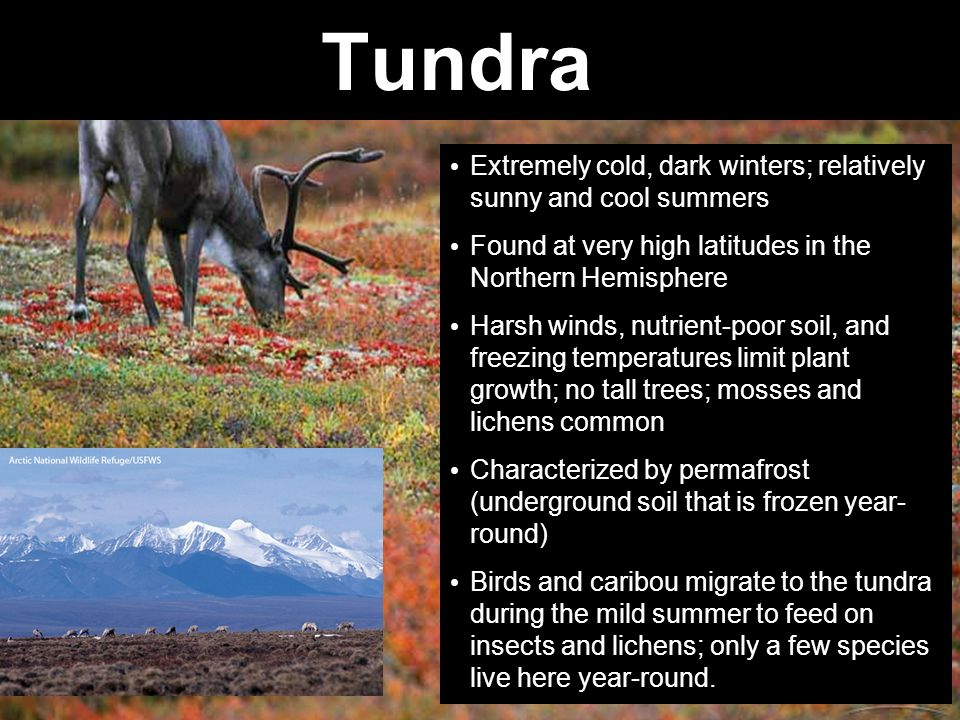 Tundra Extremely cold, dark winters; relatively sunny and cool summers