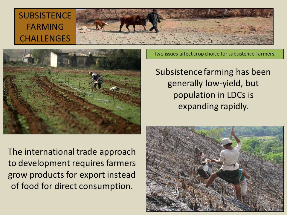 Two issues affect crop choice for subsistence farmers: