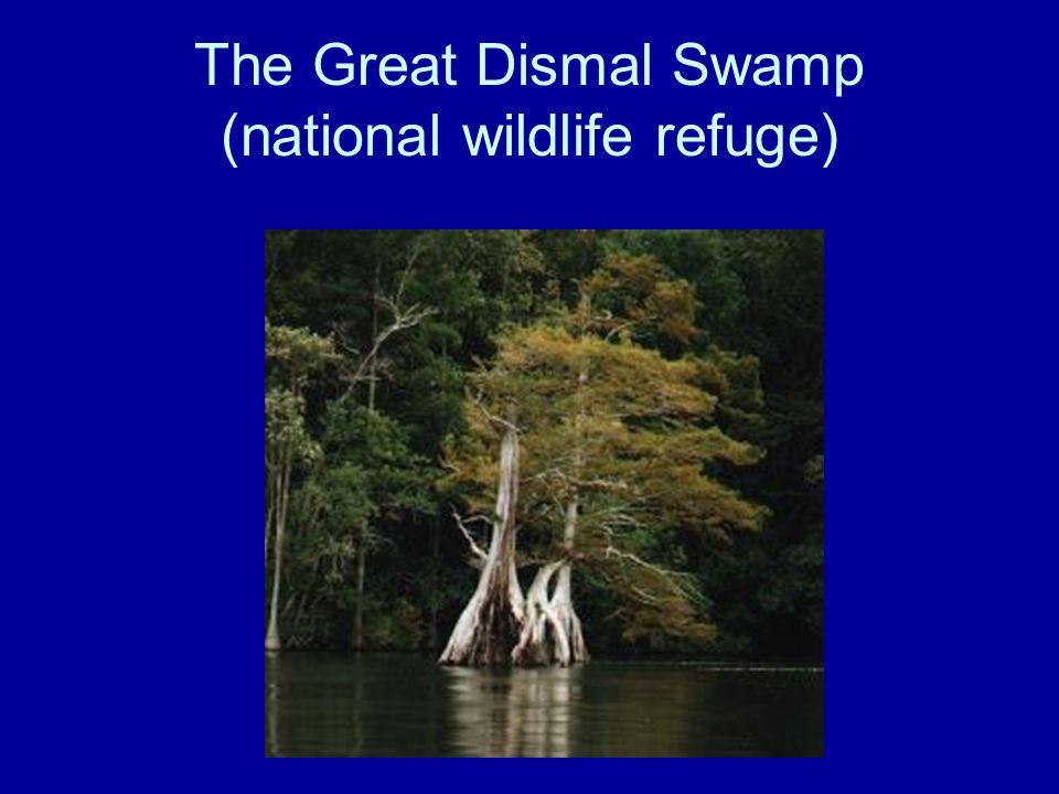 The Great Dismal Swamp (national wildlife refuge)