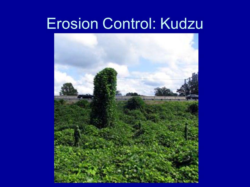 Erosion Control: Kudzu