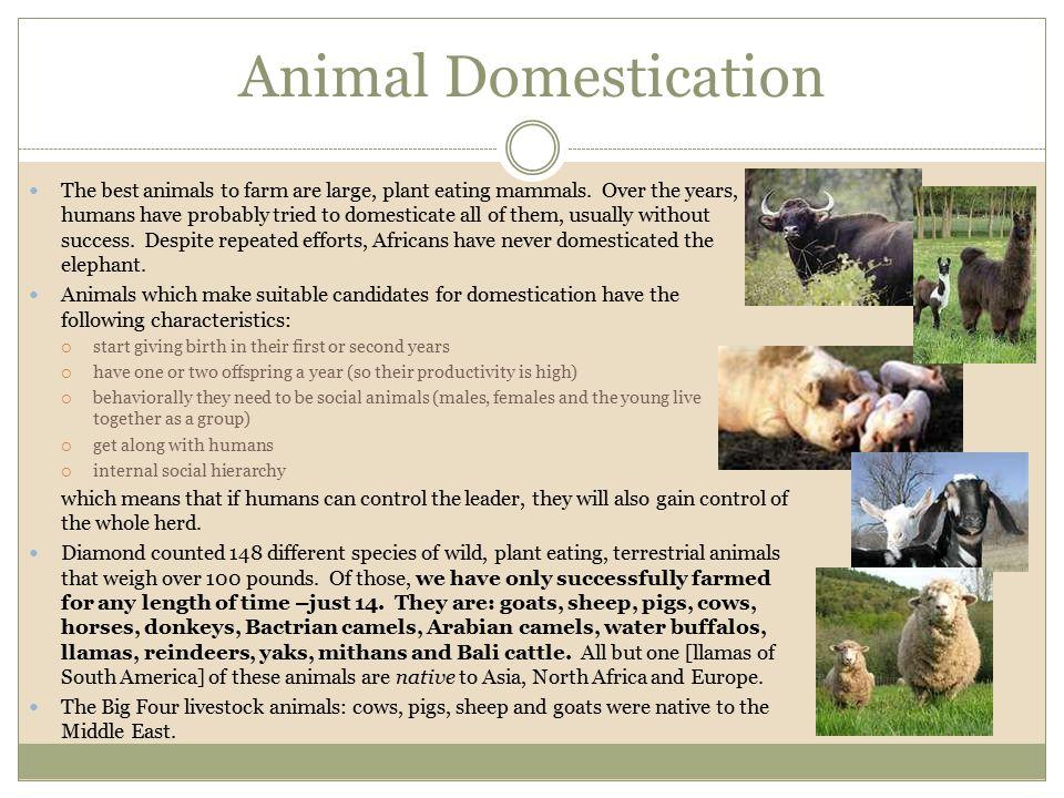 Animal Domestication