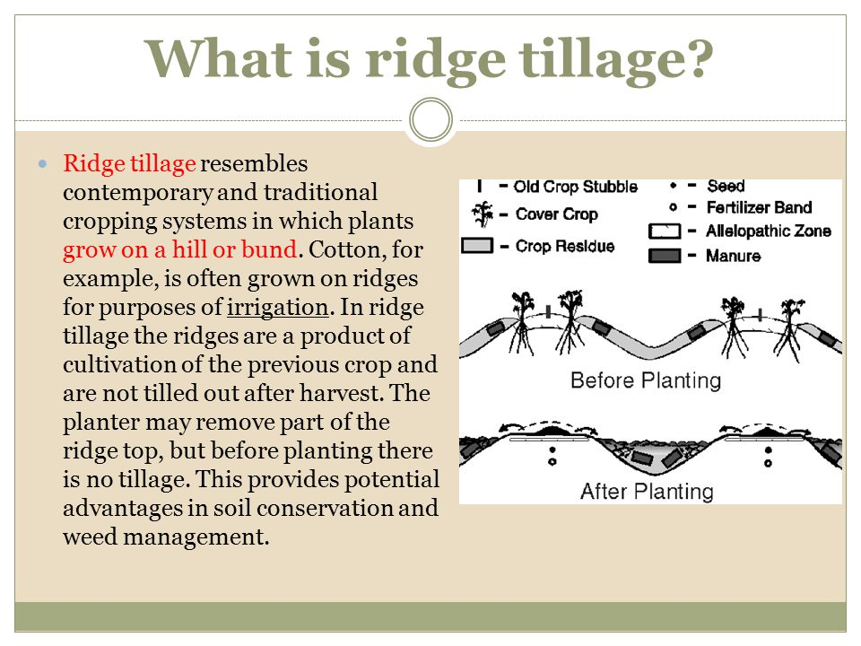 What is ridge tillage