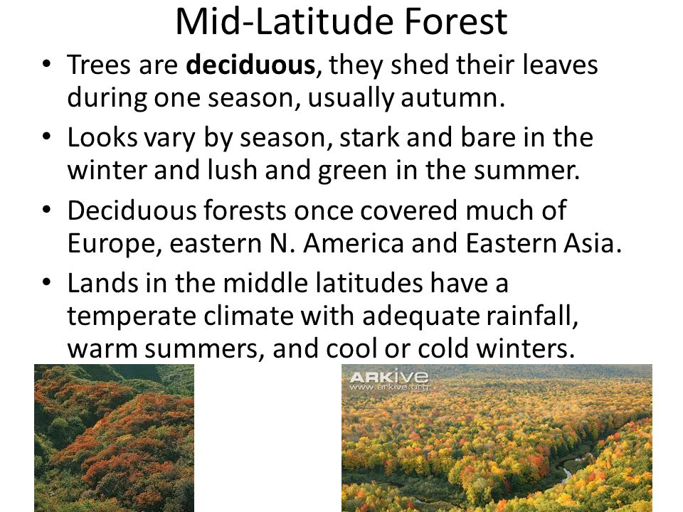 Mid-Latitude Forest Trees are deciduous, they shed their leaves during one season, usually autumn.
