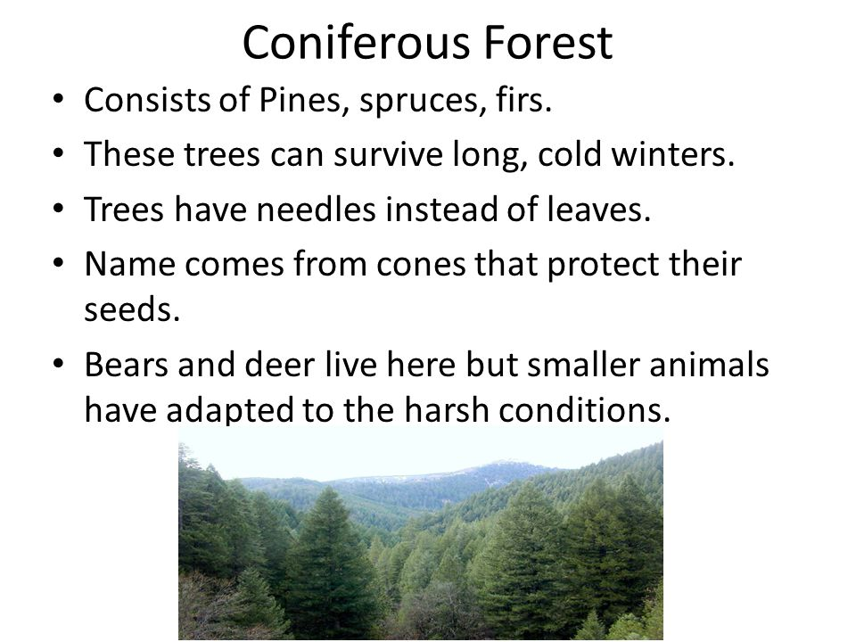 Coniferous Forest Consists of Pines, spruces, firs.
