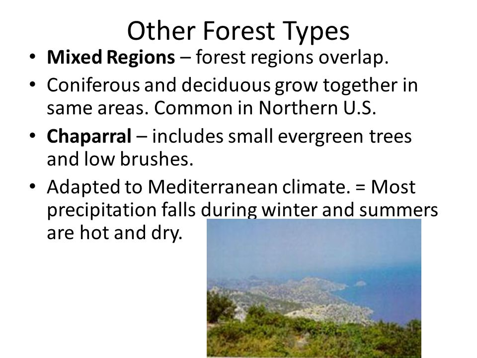 Other Forest Types Mixed Regions – forest regions overlap.