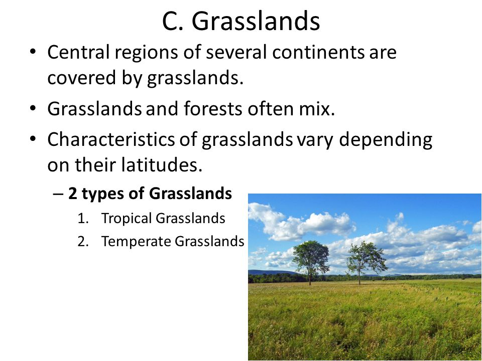 C. Grasslands Central regions of several continents are covered by grasslands. Grasslands and forests often mix.