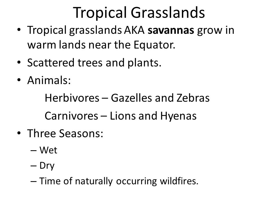 Tropical Grasslands Tropical grasslands AKA savannas grow in warm lands near the Equator. Scattered trees and plants.