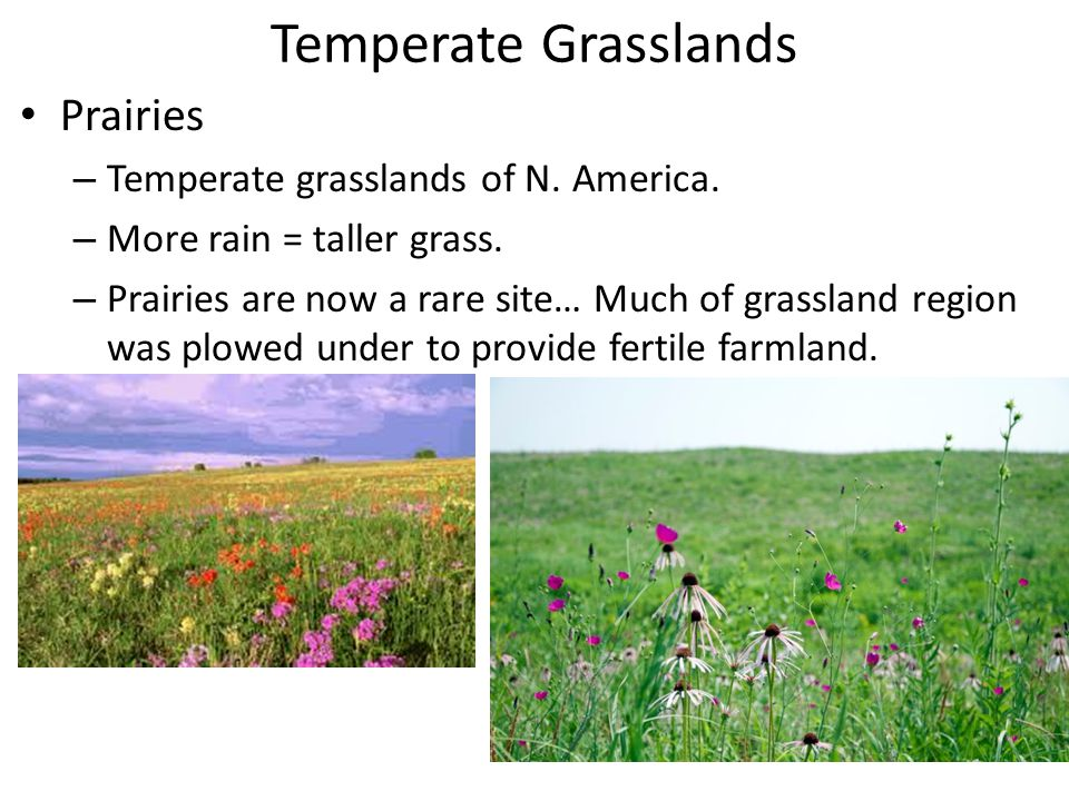 Temperate Grasslands Prairies Temperate grasslands of N. America.