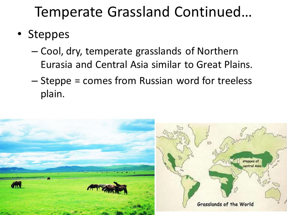 Temperate Grassland Continued…