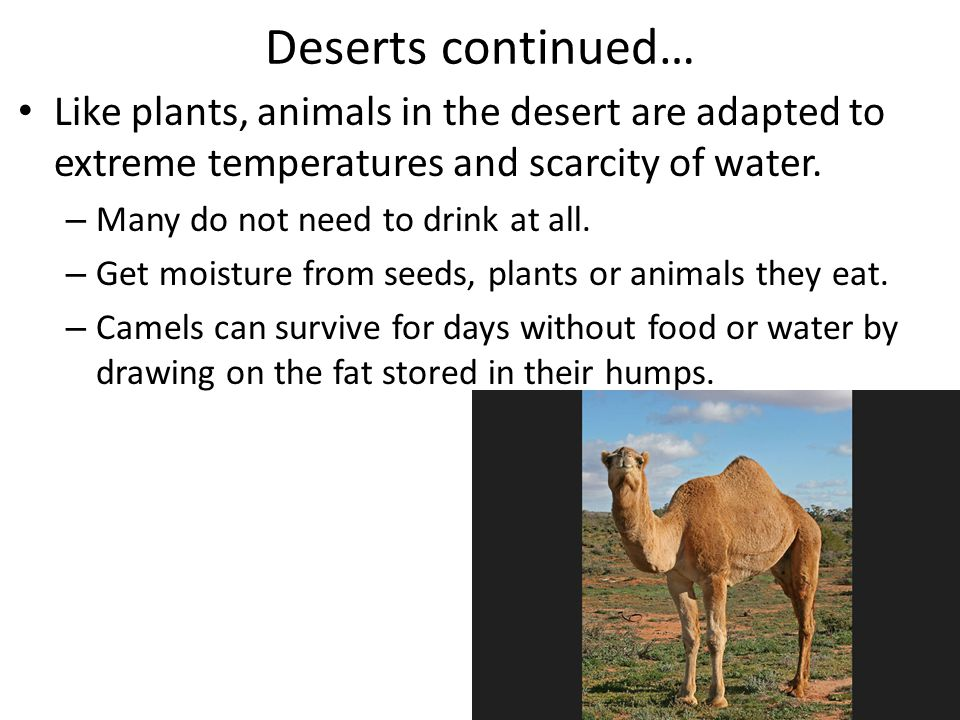 Deserts continued… Like plants, animals in the desert are adapted to extreme temperatures and scarcity of water.