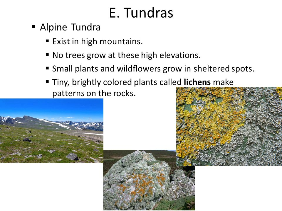 E. Tundras Alpine Tundra Exist in high mountains.
