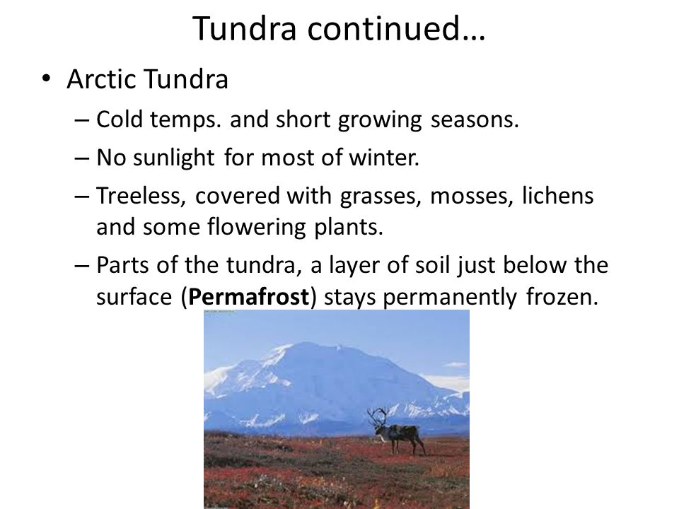Tundra continued… Arctic Tundra Cold temps. and short growing seasons.