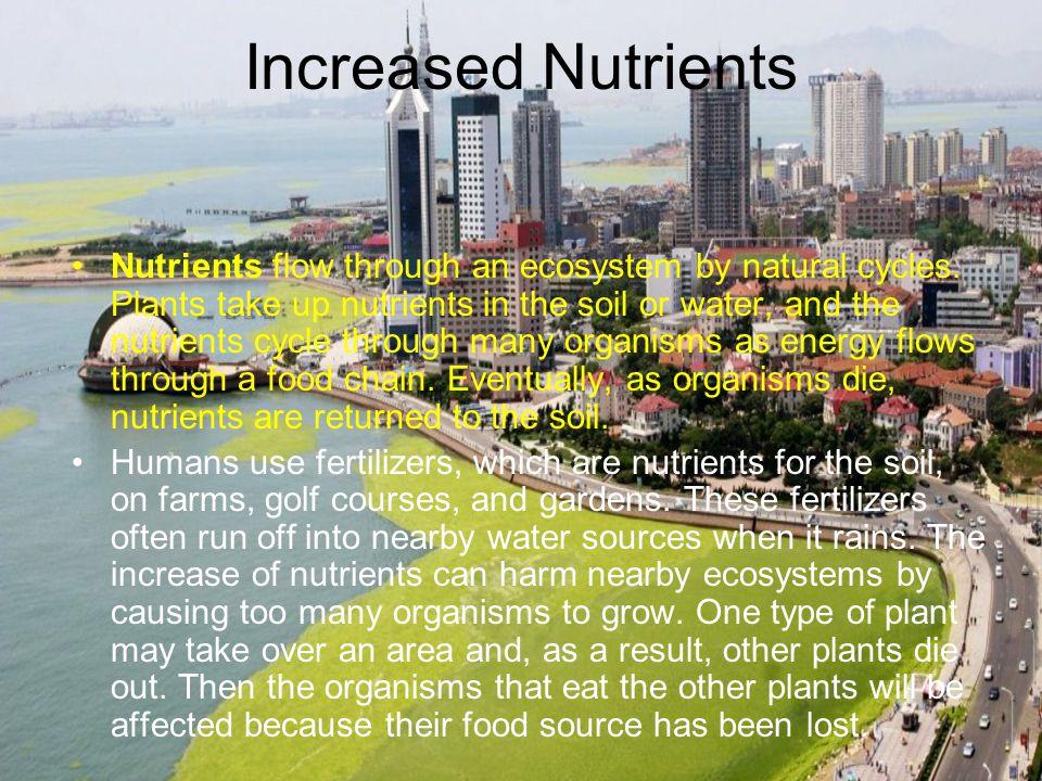 Increased Nutrients