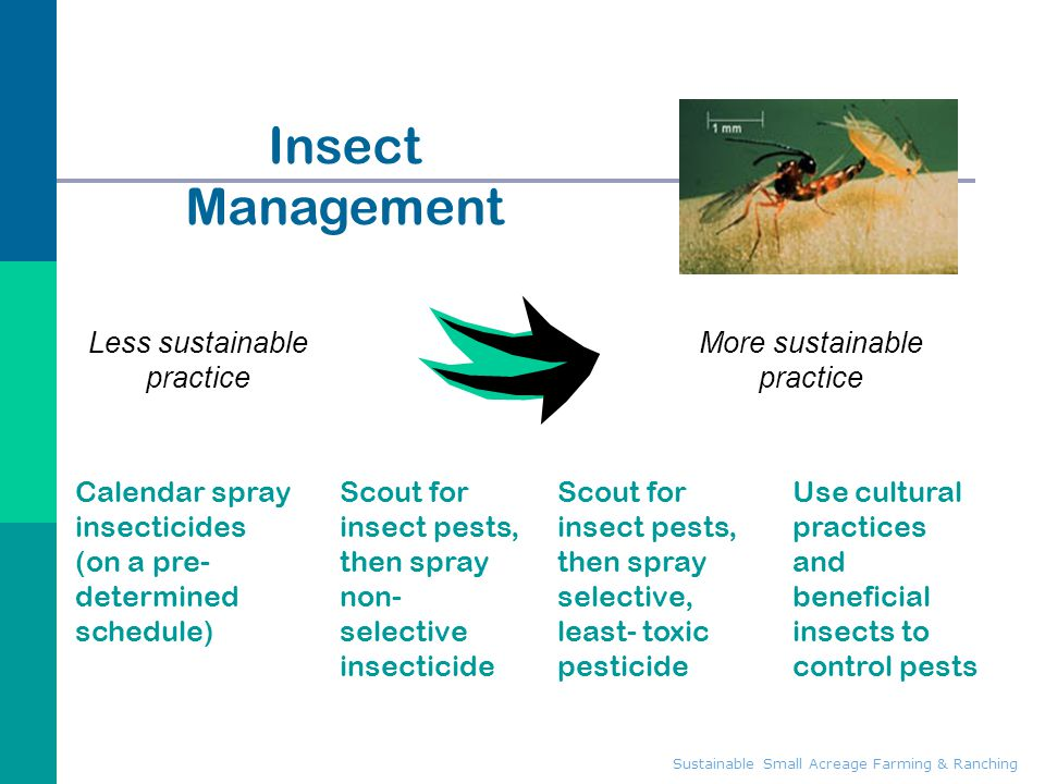 Insect Management Less sustainable practice More sustainable practice