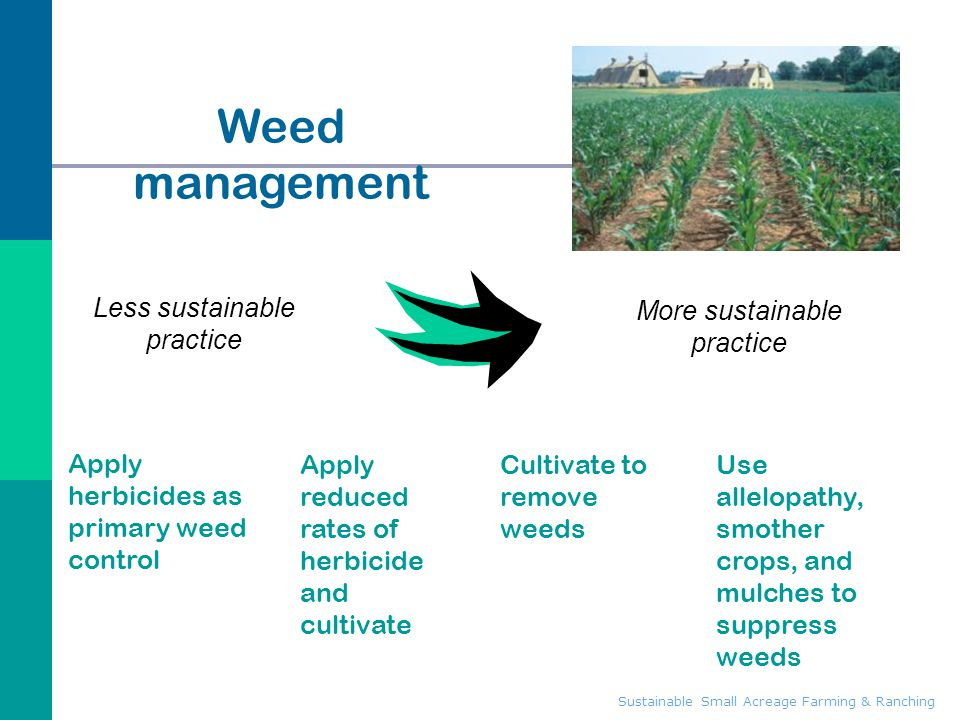 Weed management Less sustainable practice More sustainable practice