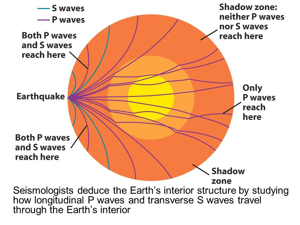 Seismologists deduce the Earth's interior structure by studying how longitudinal P waves and transverse S waves travel through the Earth's interior