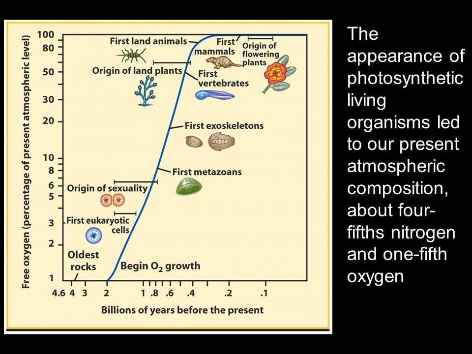 The appearance of photosynthetic living organisms led to our present atmospheric composition, about four- fifths nitrogen and one-fifth oxygen